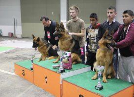 Najbolji njemački ovčari iz regije ponovno u Bjelovaru