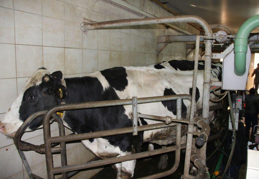 Za novu farmu iz IPARD-a dobili 1,8 milijuna kuna