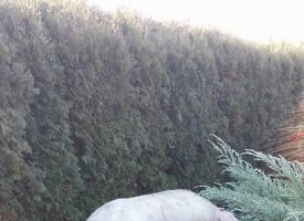 U dvorište mu dolutala krmača od 200 kilograma