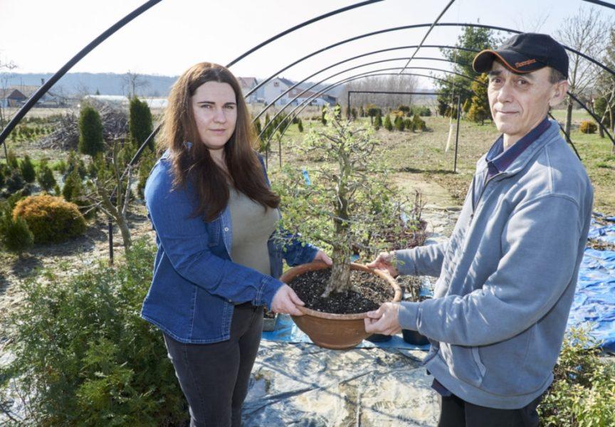 Japanci potiču uzgoj hrvatskih bonsai vrsta