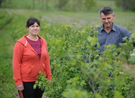 DOVEDENI PRED ZID Eko proizvođači voća zbog novih pravila pred odustajanjem