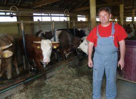 SUMRAK MLJEKARSTVA U cijeloj županiji ostalo tek 80-ak uzgajivača simentalskog goveda