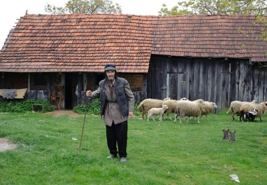 Bilo ljeto, bila zima za pastire posla uvijek ima