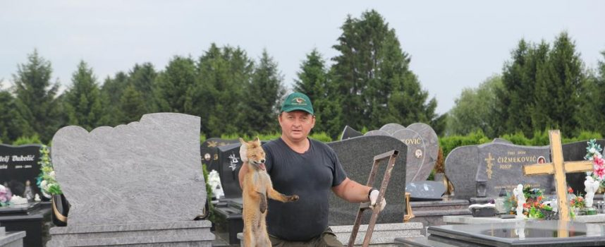 HRABROST Golim rukama hvata žive lisice i vraća ih u divljinu