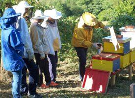 INOVATIVNO Osnovna škola Garešnica ima prvi školski pčelinjak u županiji