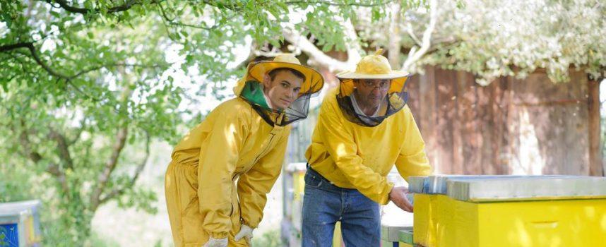 SEZONA VRCANJA BAGREMOVA MEDA Pčelari napokon dočekali uspješnu pčelarsku godinu