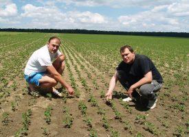 NOVE KULTURE Braća Matković već nekoliko godina uzgajaju soju