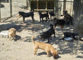 AZIL ZA PSE Na tri udomljena stiže čak 10 napuštenih pasa