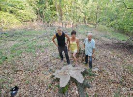 NEVIĐENA KRAĐA Drski lopovi iz šume odvezli 80-ak stabala bukve