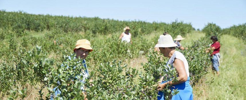 MUKE PO ZEMLJI Unatoč nezaposlenosti, sezonske poslove na poljoprivredi gotovo nitko neće raditi