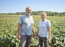 NEOBIČNA KULTURA Željka i Ivica Perija okušali se u uzgoju bamije