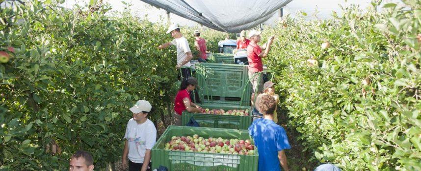 NISU SVI U IRSKOJ Poljoprivredne tvrtke uspjele zadovoljiti potrebe za radnicima