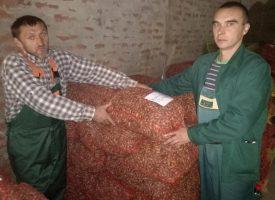SEZONCI NA DJELU Na području bjelovarske Uprave šuma u tijeku je kampanja sakupljanja žira