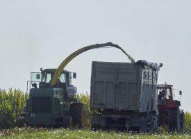 NA POLJU Kukuruzna silaža nije za stoku već za bioplinske elektrane