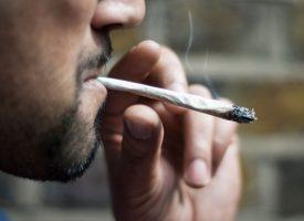 DROGA U BJELOVARU  Marihuana je najtraženija, teških droga gotovo i nema