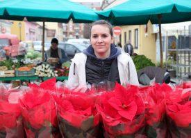 BOŽIĆNA ZVIJEZDA Proizvođači tradicionalnog 'božićnog cvijeta' došli na svoje