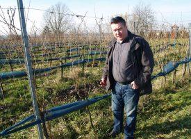 REZIDBA I PRIPREMA LOZE Vinogradari imaju pune ruke posla