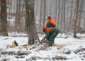 RADI SE U SVIM UVJETIMA Trećinu prihoda bjelovarski šumari ulažu u obnovu šuma