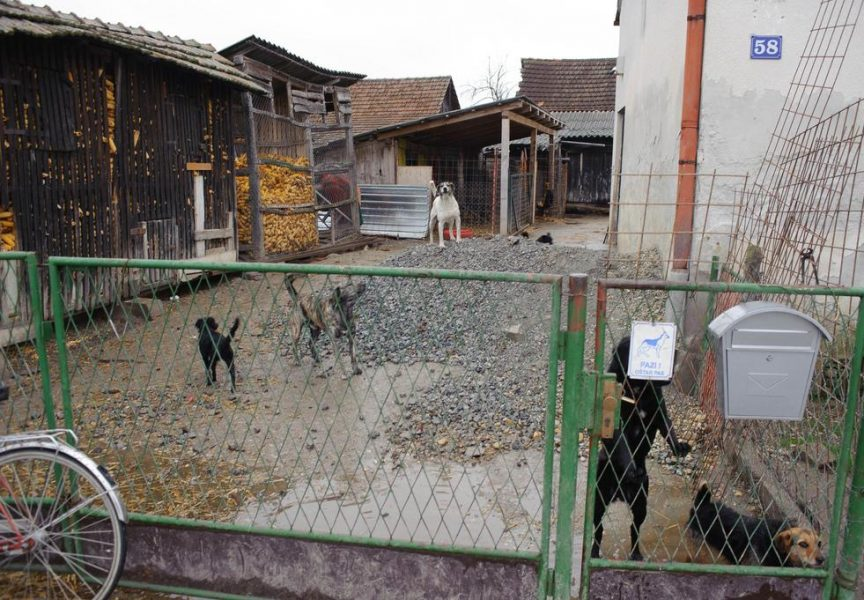 AZIL U PREDAVCU Međusobne optužbe zbog 105 pasa