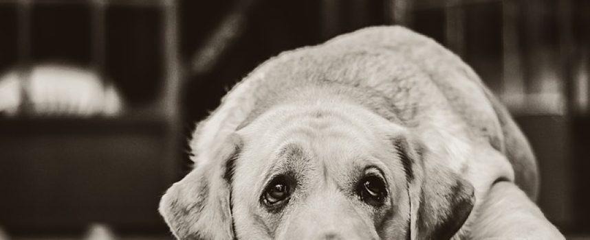 MANIJAK OPET NA DJELU Novi slučajevi trovanja životinja