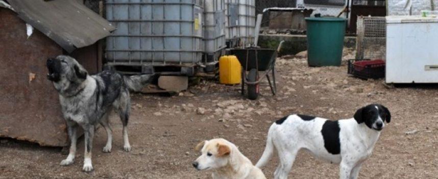 BRIGO MOJA PRIJEĐI NA DRUGOGA Je li Grad Bjelovar poduzeo sve što je trebao u zbrinjavanju napuštenih životinja?