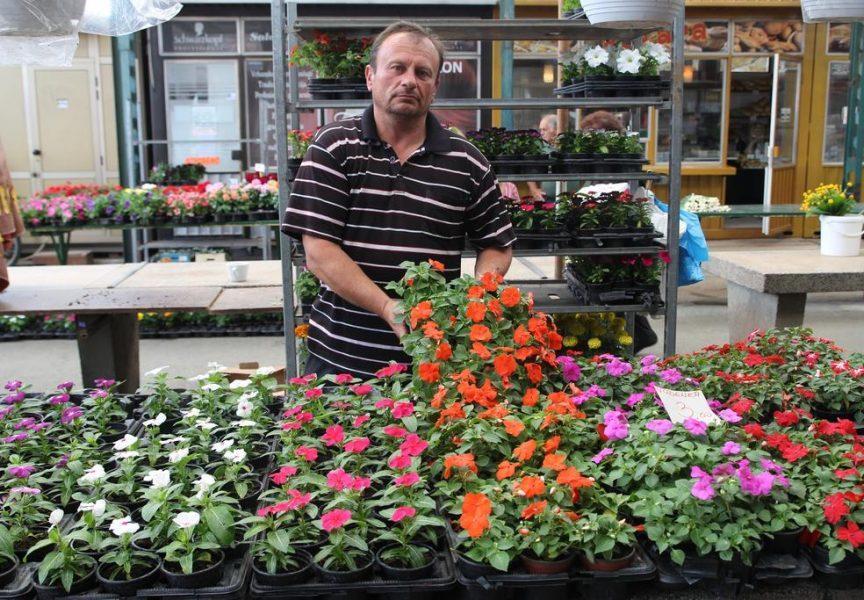 TRŽNICA PREPUNA LJETNICA Cvjećari zadovoljni, kupci kupuju više nego lani