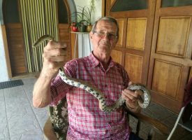 PROVJERILI SMO Ima li razloga za bojazan od najezde zmija