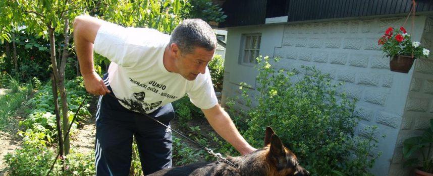 NJEMAČKI OVČARI Psi iz bjelovarske uzgajivačnice nalaze se po cijelom svijetu