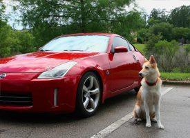 BIZARNO Vozaču koji joj je pregazio psa mora platiti 5100 kuna