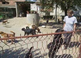 NAPUŠTANJE PASA Bjelovarčani se po pitanju napuštanja pasa nisu nimalo osvijestili