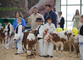 JESENSKI SAJAM Bolji uvjeti za Državnu stočarsku izložbu
