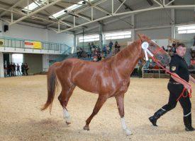 FOTOGALERIJA – NAJBOLJI KONJI Na Bjelovarskom sajmu nagrađeni najbolje ocjenjeni konji