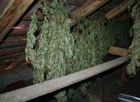 FOTO – Pronađeno 10 kilograma marihuane kod 35-godišnjeg Daruvarčanina