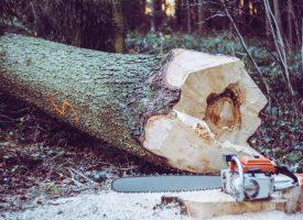 VELIKA ŠTETA Nezapamćena šumska krađa u Garešnici