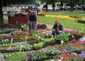 FOTO – BJELOVARSKI CVJETNI SAJAM Raskošne boje cvijeća u središnjem parku