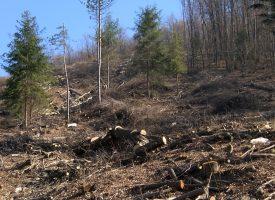 ŠUMSKO BLAGO – Što se događa s bilogorskim šumama?