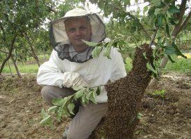 Teška pčelarska godina u kojoj je bilo najvažnije očuvati zajednice
