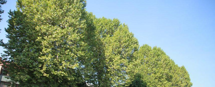 BJELOVARIJE Zelenila nema jer drveće presporo raste