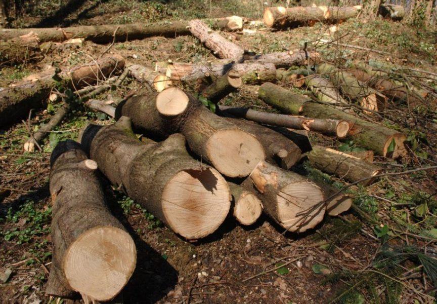 BLIŽI SE SEZONA GRIJANJA Šume na udaru lopova