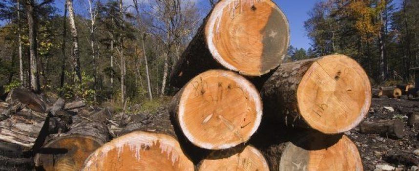 BESRAMNO Starici porušili čitavu šumu. Šteta 112 tisuća kuna