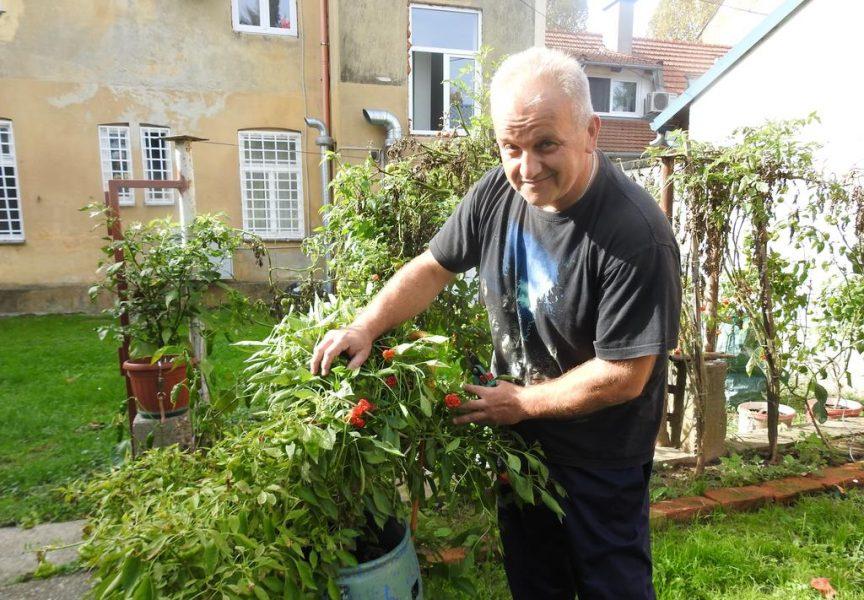 LJUTO, LJUTO, LJUTO Bjelovarčanin u svome dvorištu uzgaja više od 20 vrsta ljutih paprika