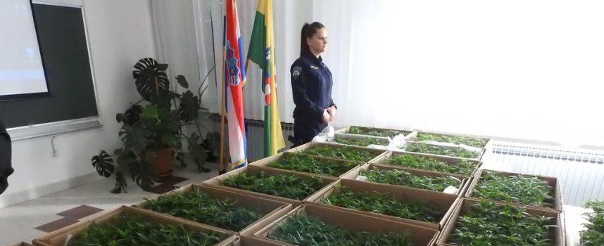 VELIKI POLICIJSKI ULOV Pronašli ilegalni laboratorij i 1600 sadnica indijske konoplje