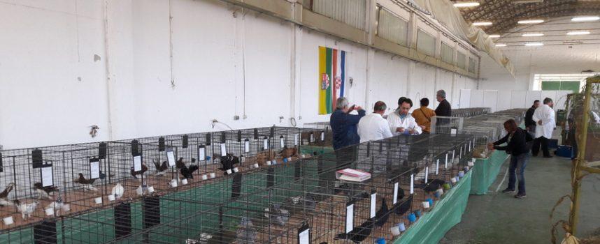 OVOGA VIKENDA 27. Županijska izložba malih životinja