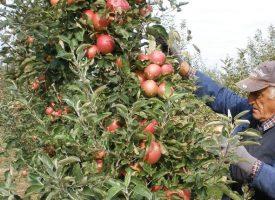 UDURUGA VOĆARA I POVRĆARA Premalo se otkupljuje od lokalnih proizvođača