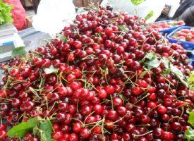Bjelovarčani jedva dočekali prve domaće rane trešnje
