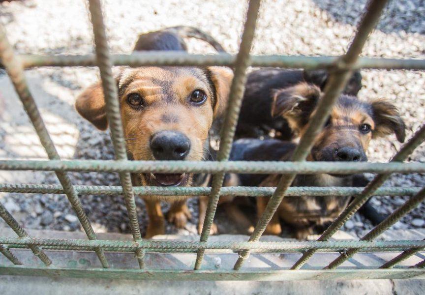 AZIL ŠAPA – U kolovozu udomljena samo dva psa