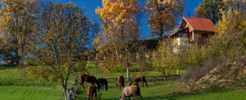 NA MALENOM BRIJEGU – Posebna nagrada na području srednje i jugoistočne Europe