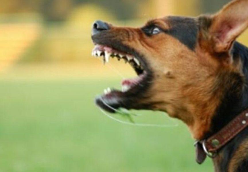 Pas izgrizao dječaka, vlasnik kažnjen s novčanom kaznom