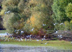 PRIRODNA BOGATSTVA  Europska ekološka mreža NATURA 2000 prostire se diljem županije