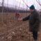 Nedaleko Rovišća posadio 5 tisuća stabala jabuka